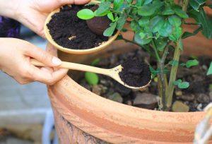 Marc de café fertilisant