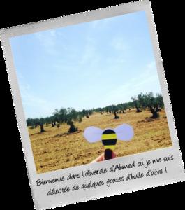Découverte de l'oliveraie d'Ahmed - BeeShary - envolée tunisienne
